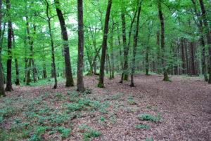 Hügelgräber der Kelten im Eckfelder Wald