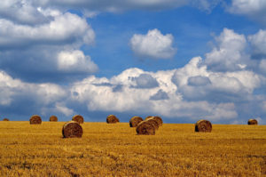 Getreidefelder - Auf Birkenhöh