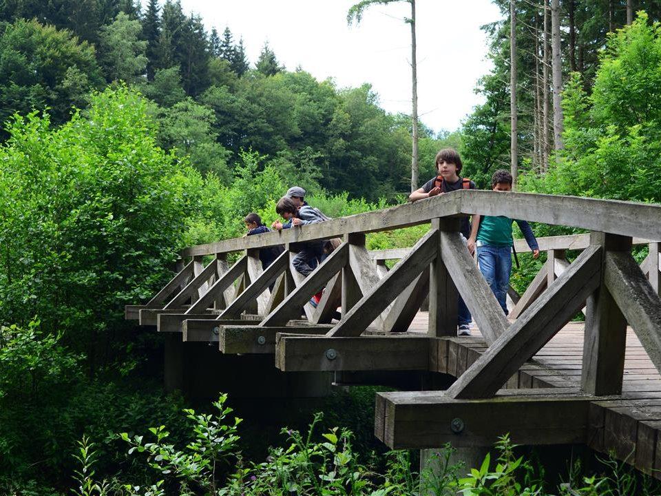 Die Urpferdbrücke direkt am Eifelsteig