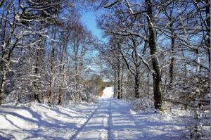 Winterstimmung - Nähe Hillscheid