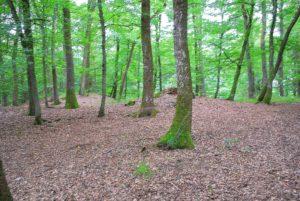 Keltische Hügelgräber im Wald